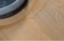 Treibholzlauge-V01